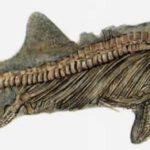 Ископаемые остатки ихтиозавра. Сохранились и отпечатки мягких частей тела.