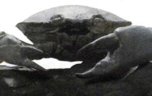 Этому отлично сохранившемуся крабу более 10 миллионов лет