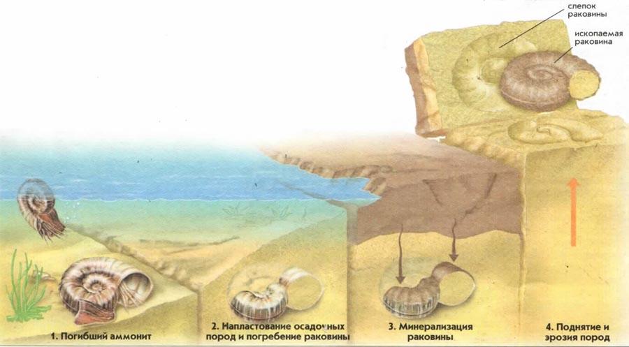 Процесс образования ископаемых