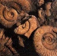 Время ископаемых