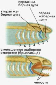 Челюстные рыбы