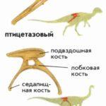 Две большие группы динозавров
