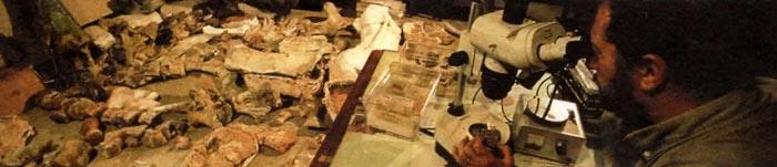 Палеонтолог исследует под микроскопом фрагмент кости динозавра