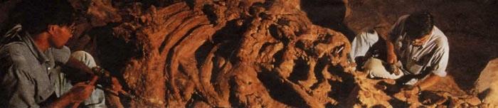 Чтобы очистить кости большого динозавра, могут потребоваться месяцы кропотливой работы.
