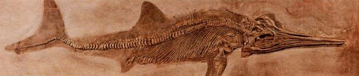 Ихтиозавр был очень похож на рыбу, однако он являлся рептилией.