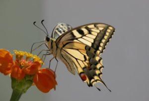 Цветковые растения и насекомые