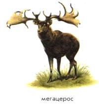 Мегацерос