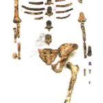 Люси, знаменитый австралопитек женского рода