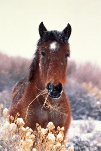 Лошади и их сородичи