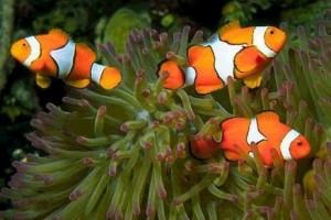 О рыбьих хвостах