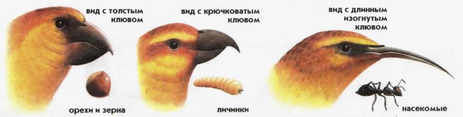 Теории эволюции