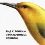 Птицы Гавайских островов