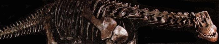 Изучение ископаемых животных (здесь большой динозавр) предоставляет доказательства эволюции видов.