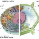 Эволюция клеток