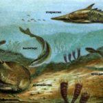 Эти первые позвоночные рыбы сохранились только в ископаемом виде, но некоторые их потомки живут и в наше время.