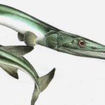 Заурихтис (длина 1м) жил 230 миллионов лет назад. Охотился, подстерегая добычу в реках, как современная щука.