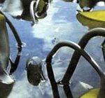 Водоросли (ламинарии) иногда проникают на мелководье.
