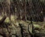 Отравляющие газы рассеиваются в атмосфере, а затем выпадают на землю в виде кислотных дождей.