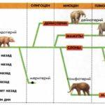 Эволюция слонов