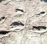 Отпечатки следов австралопитеков