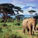 Слоны и их предки