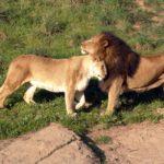 Дикие животные (обои)