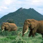 Фото диких животных обои
